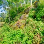 Beautiful summer countryside landscape — Stock Photo #40036257