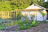 Farm shed with garden bed — Stock Photo