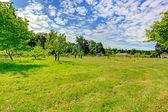 美丽的夏天农村景观 — 图库照片
