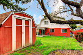 Backyard with green lawn and red shed — Stock Photo