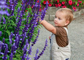 Happy Baby boy is standing in the park near large bush of purple — Stock Photo