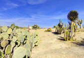 Balboa park in San Diego, cactus garden with desert.  — Stock Photo