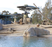 Elephant aviary in San Diego Zoo — Stock Photo
