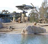Elephant aviary in San Diego Zoo — Stock Photo