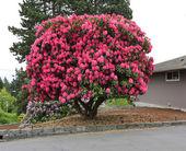 Beautiful blooming tree — Stock Photo