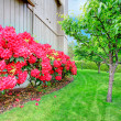 Beautiful backyard garden. Blooming azales — Stok fotoğraf #45003099