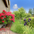 Beautiful backyard garden. Blooming azales — Stok fotoğraf