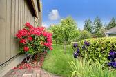 Beautiful backyard garden. Blooming azales — Stock Photo