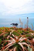 Ocean view. Laguna Beach — Stock Photo