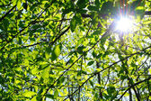 Sunlight getting through the tree — Stock Photo