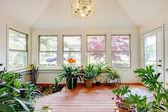Home greenhouse interior — Stock Photo