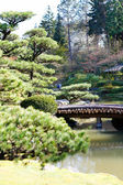 Picturesque pond in Japanese garden — Stockfoto