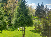 Backyard view through the window — Stockfoto