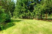 Quintal verde. paisagem campestre — Fotografia Stock