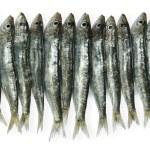 Sardines — Stock Photo #21037173