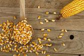 トウモロコシ — ストック写真