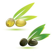 Grüne und schwarze Oliven, isolierte Vektor-illustration — Stockvektor