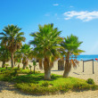 Palm trees on a beach in Fuengirola — Stock Photo #15631619