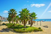 Palm trees on a beach in Fuengirola — Stock Photo