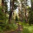 Peaceful Forest Path — Stock Photo #12055748
