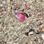Underwater Sea Shells — Stock Photo