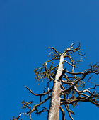 Tree Skeleton — Stock Photo