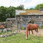 Horse Lawnmower — Stock Photo