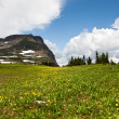 Meadow Flowers with Mountain — Stock Photo