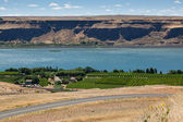 Vineyard on the Columbia River — Stock Photo