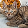 Striped Kitten — Stock Photo