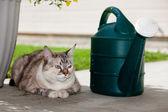 Outdoor Garden Cat — 图库照片