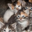 Baby Kittens — Stock Photo #33936337