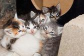 Snuggling Kittens — Stock Photo