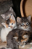 Curious Kittens — Stock Photo
