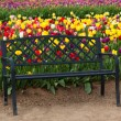 Black Bench with Tulips — Stock Photo #46056525