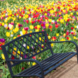 Bench and Tulips — Stock Photo #46056537