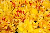 Tulipán kytice — Stock fotografie