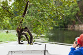 Spider Monkey with Tourist — Stock Photo