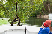 Spider Monkey Posing for Tourists — Stock Photo