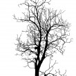 Stock Vector: Dead Tree without Leaves Vector Illustration Sketched, EPS 10.