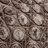 Nature Crocodile Skin Texture Background. — Stock Photo