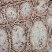 Naturen krokodil hud textur bakgrund. — Stockfoto