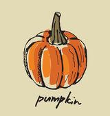 Hand drawn pumpkin — Stock Vector