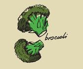Hand drawn broccoli — Stock Vector