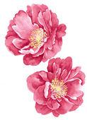 Flor de ilustração em aquarela — Fotografia Stock