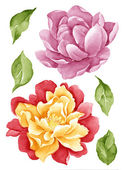 Watercolor illustration0404 — ストック写真
