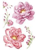 Aquarel illustratie bloem in eenvoudige witte achtergrond — Stockfoto