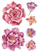 Акварельные иллюстрации цветок в простой белый фон — Стоковое фото
