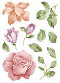 Watercolor illustration flower in simple white background — Stock Photo