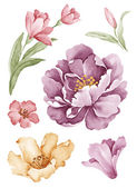 Watercolor illustration flower in simple white background — Foto Stock